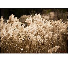 Tidbinbilla Nature Reserve - The Sanctuary Photographic Print