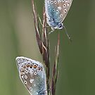 Blues by Neil Ludford