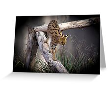Young Serval Greeting Card