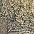 Elephant Tree Hawthorn Victoria by Lynne Kells (earthangel)