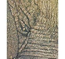 Elephant Tree Hawthorn Victoria Photographic Print