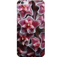 Oh Hoya! iPhone Case/Skin