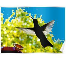 Hummingbird Series 13 Poster