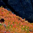 colors of nature by Daidalos
