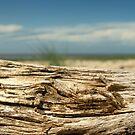 Beachcomber by Sandy Edgar