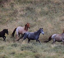 The Brumbies of Dead horse gap  by Donovan wilson