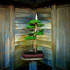 Bonsai Tree by jswolfphoto