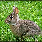 Bunny Baby © by Dawn M. Becker