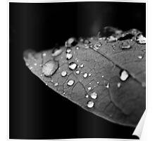Water drop on leaf V Poster