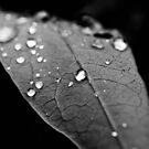 Water drop on leaf VI by Matthew Bonnington