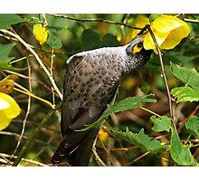 NATURE BIRDLIFE Photographic Print