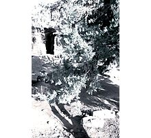 Cave & Tree Photographic Print