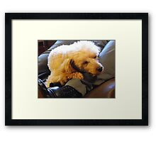 Letting Sleeping Dogs Lie...(on legs...) Framed Print
