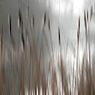 Reeds Abstract - brown by KUJO-Photo