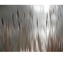 Reeds Abstract - brown Photographic Print