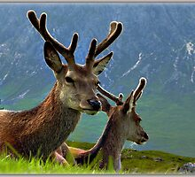 Deer of Glencoe by Sheerlight