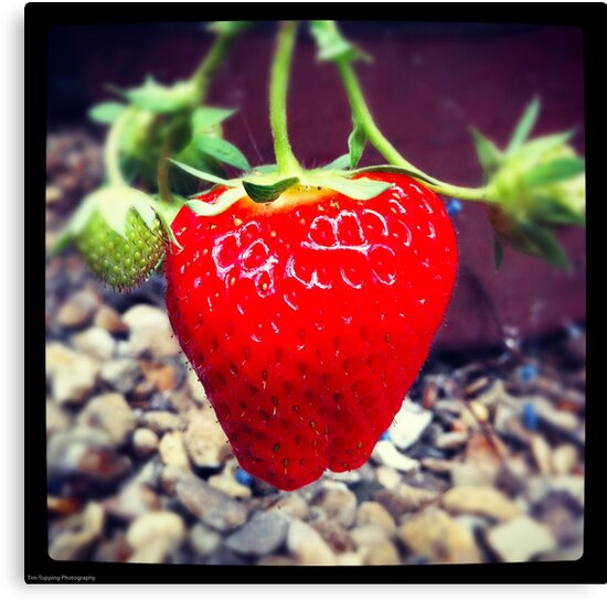 Strawberry by Tim Topping
