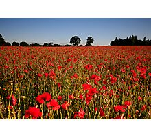Harmer Hill Poppy Field Photographic Print