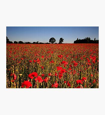 Harmer Hill Poppy Field Photographic Print