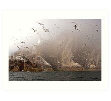 The Gannets of Bass Rock in the Mist Art Print