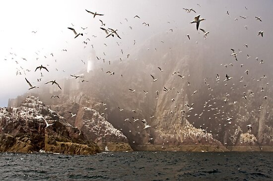 The Gannets of Bass Rock in the Mist by ten2eight