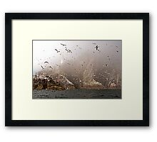 The Gannets of Bass Rock in the Mist Framed Print