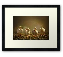 Dancing On Daisies Framed Print