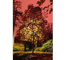 Sunset Tree Photographic Print