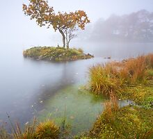 Tree In The Mist by Jeanie