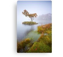 Tree In The Mist Canvas Print