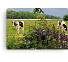 The Cows In The Meadow Canvas Print