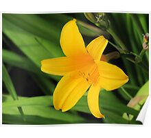 Daylily in Yellow Poster