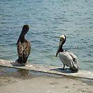 Love Birds by Atakmunky7