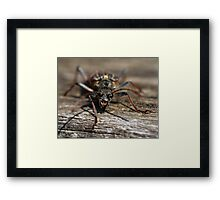 Isle of Mull Insect Framed Print