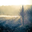 Misty Morning by Andrew Rossington