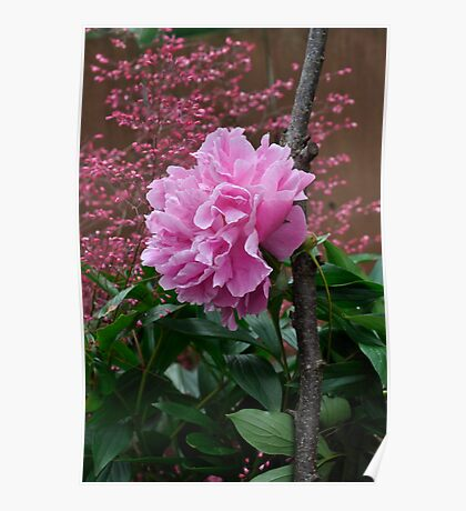 Peony & Astilbe Poster