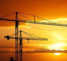 Tropical cranes by Alex Preiss