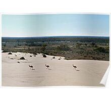 Emus at Lake Mungo Poster