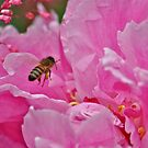 Astilbe, Peony and a Bee by scenebyawoman