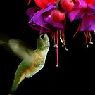HUMMER IN THE FLOWERS by RoseMarie747