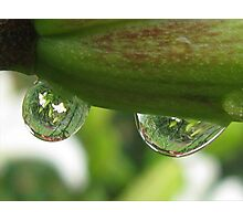 Garden Reflections in Raindrops Photographic Print