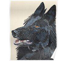 Belgian Shepherd Vignette Poster