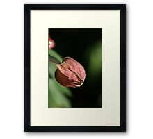 Hang Out The Lantern Framed Print