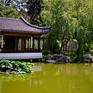 Chinese Pond by jswolfphoto