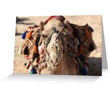 Close-up portrait of a camel, Negev, Israel Greeting Card