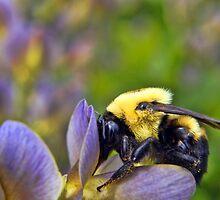 Sweet Sweet Pollen by EbelArt