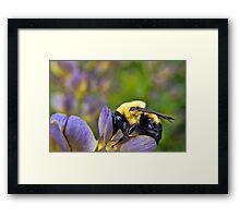 Sweet Sweet Pollen Framed Print