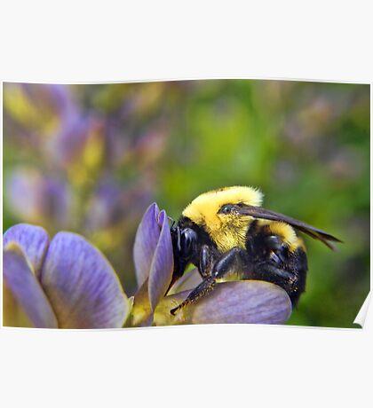 Sweet Sweet Pollen Poster