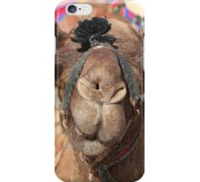 Close-up portrait of a camel, Negev, Israel iPhone Case/Skin