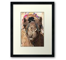Close-up portrait of a camel, Negev, Israel Framed Print